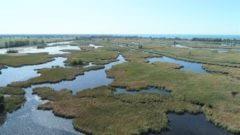 Great Lakes Moment: International wetlands treaty turns 50