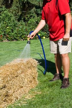 Man watering straw bale garden