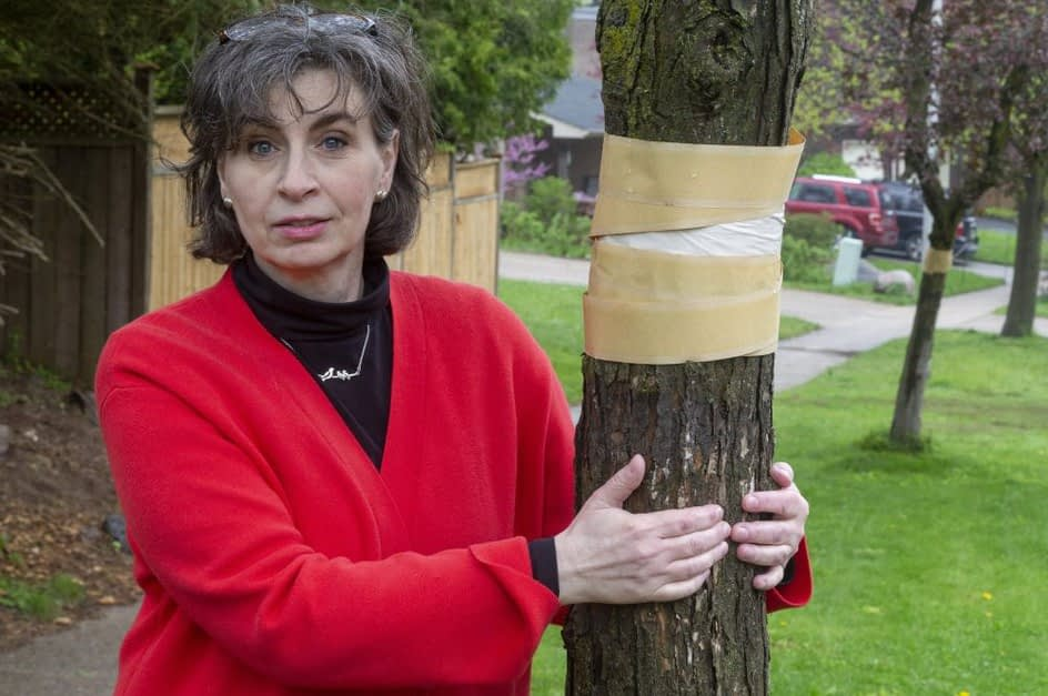 London to spray for gypsy moths in five parks this month